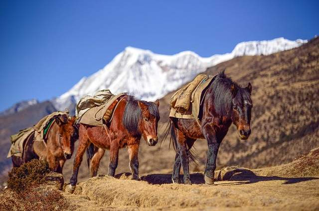 Bhutan montagne cavalli