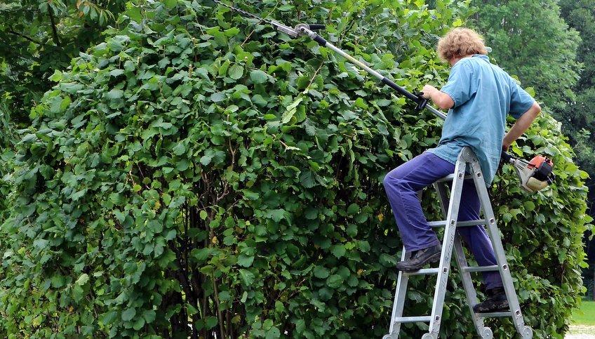 Giardiniere